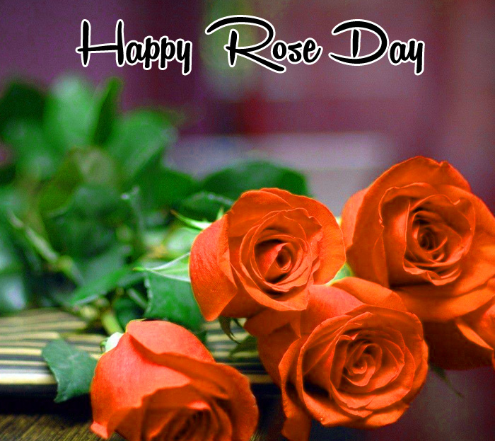Happy Rose Day pics for whatsapp hd