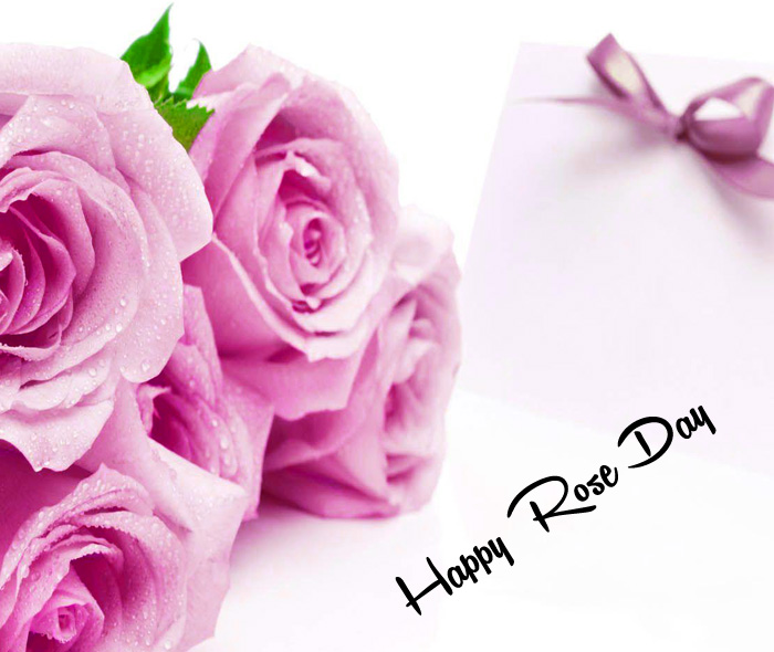 Happy Rose Day pink wallpaper hd