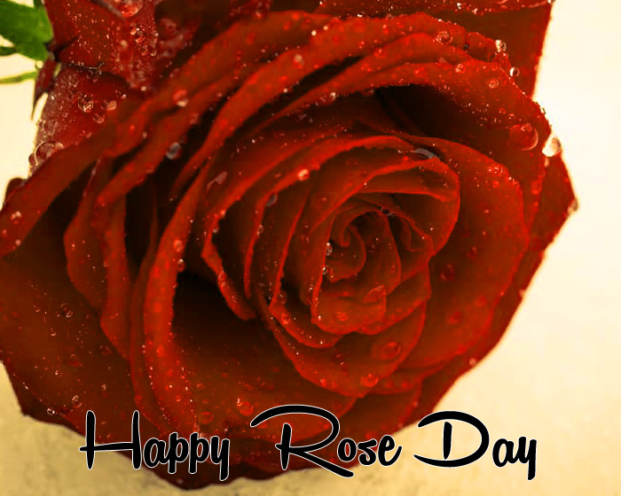 Happy Rose Day sad flower hd