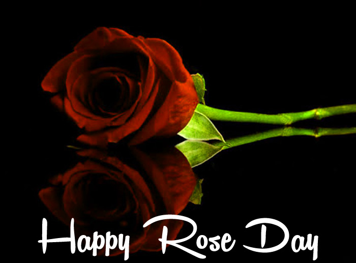 Happy Rose Day sad flower images