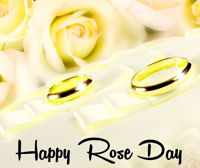 Happy Rose Day white flower hd