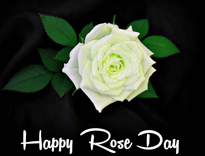 Happy Rose Day white flower images