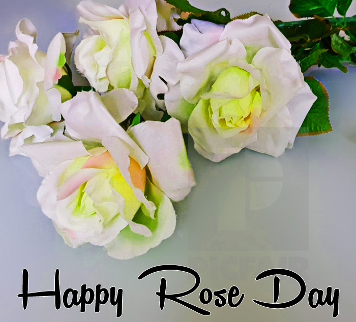 Happy Rose Day white images hd