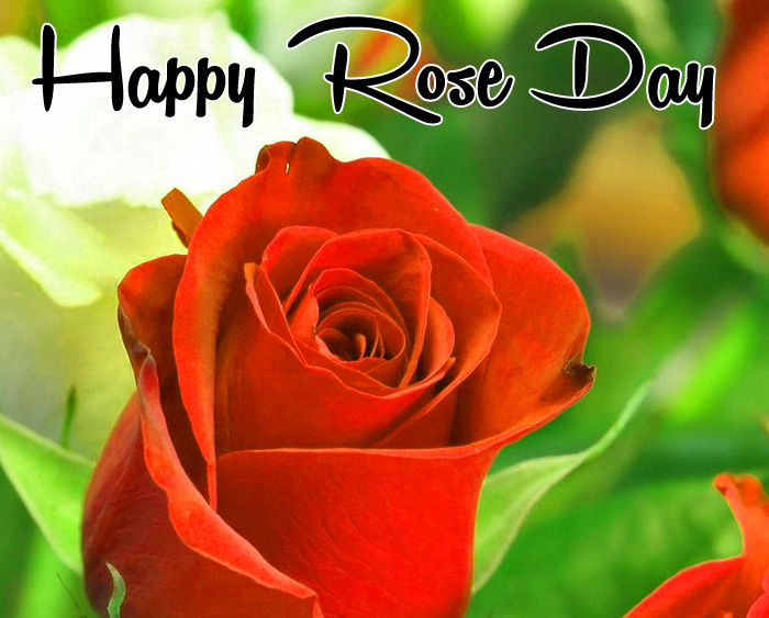 alone flower Happy Rose Day hd pics hd