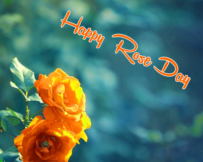 alone flower Happy Rose Day pics hd