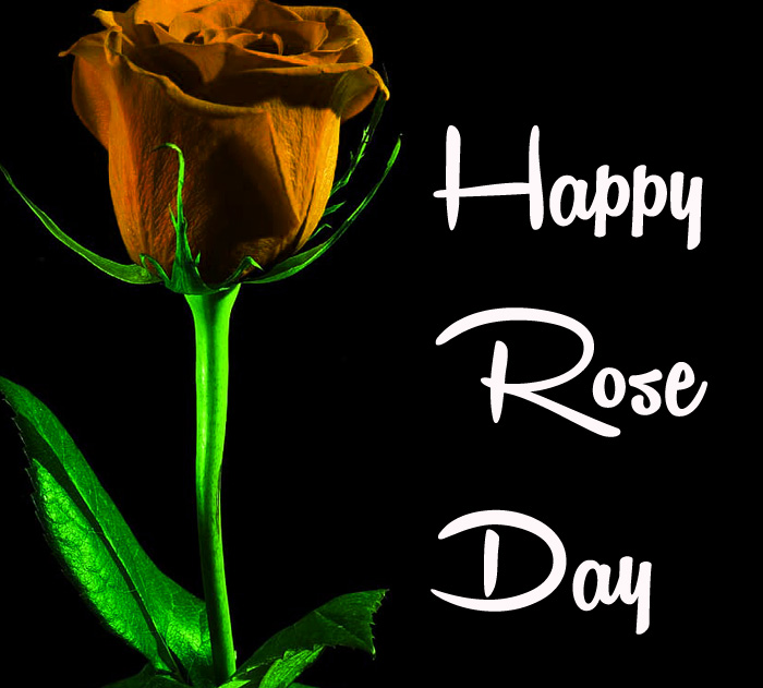 balck flower Happy Rose Day hd