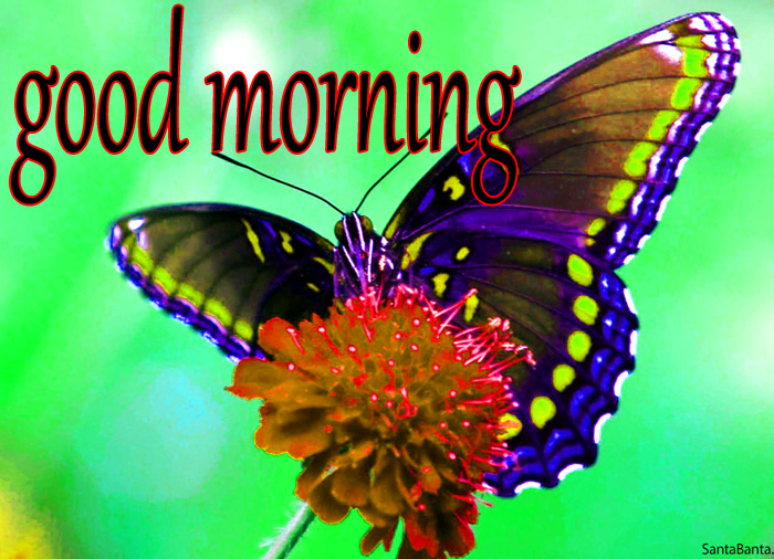beautiful butterfly nature best pic hd download