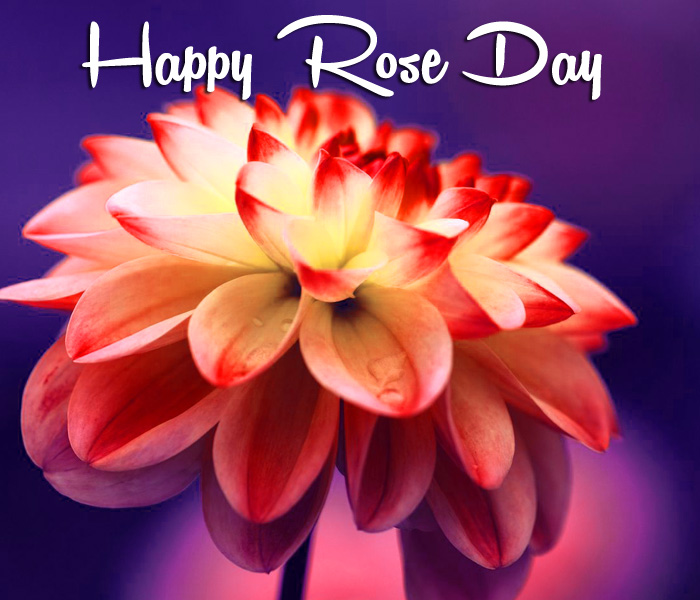 beautiful flower Happy Rose Day Gift pics hd