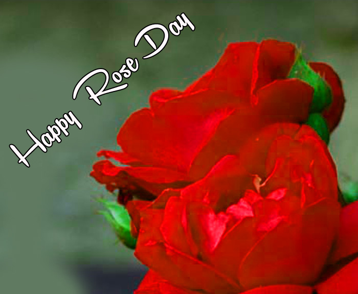 beautiful flower Happy Rose Day wallpaper
