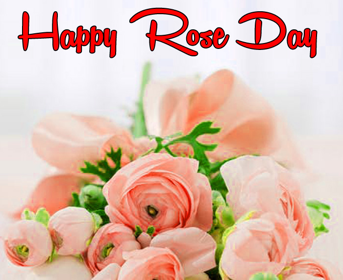 beautiful pibk flower Happy Rose Day hd
