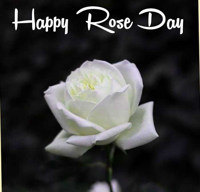 beautiful white flower Happy Rose Day images