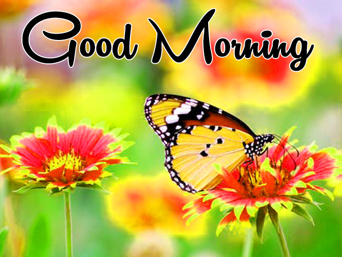 best butterfly Good Morning photo