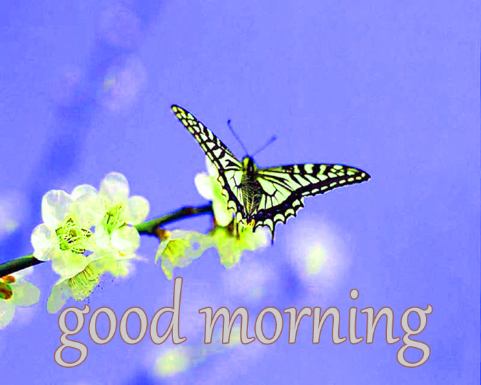 best butterfly and nature good morning hd image for download