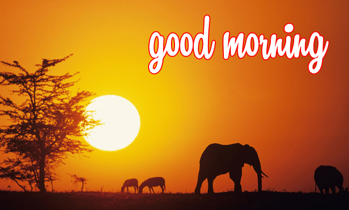 best elephant and nature hd pics download