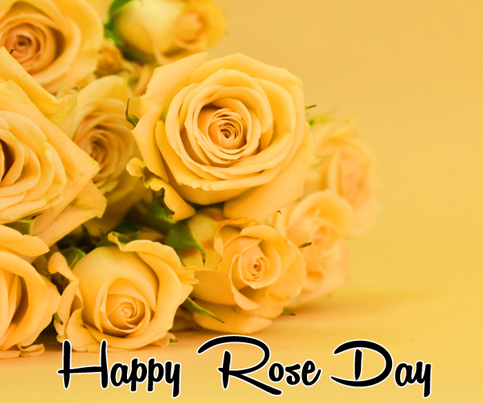 best flower Happy Rose Day photo for whatsapp hd