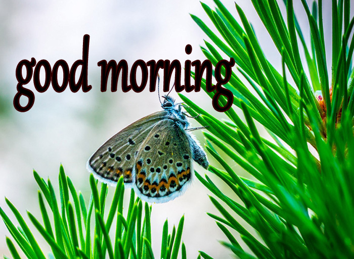 best flower and butterfly good morning hd pics download