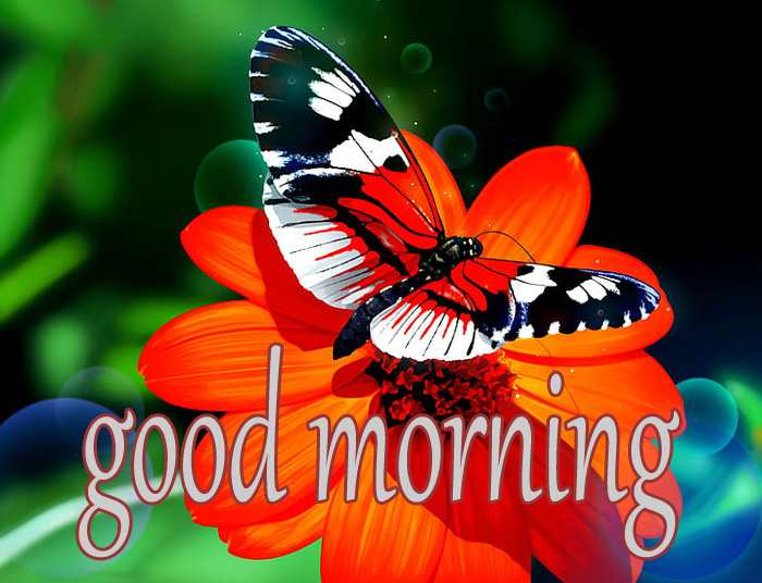 best flower and butterfly good morning images hd download