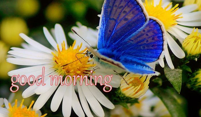 best flower and nature good morning images download