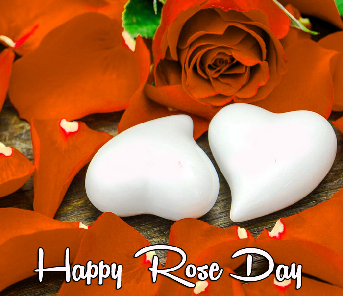 best love Happy Rose Day images hd