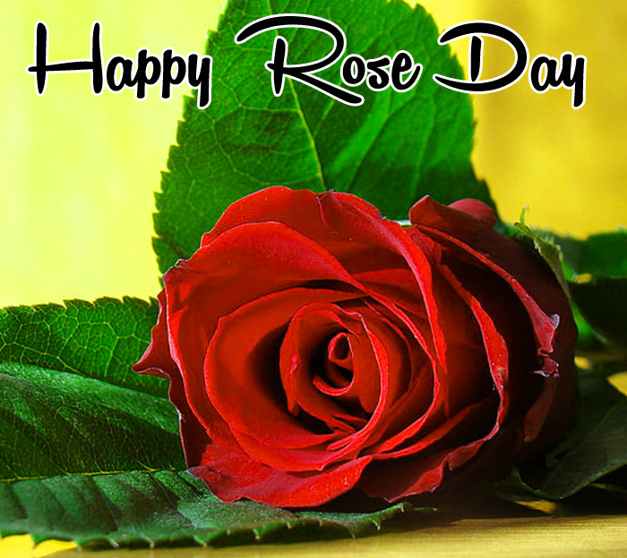 best love flower Happy Rose Day wallpaper