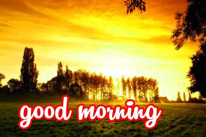 best nature and tree good morning image hd download
