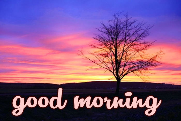 best nature tree good morning image download