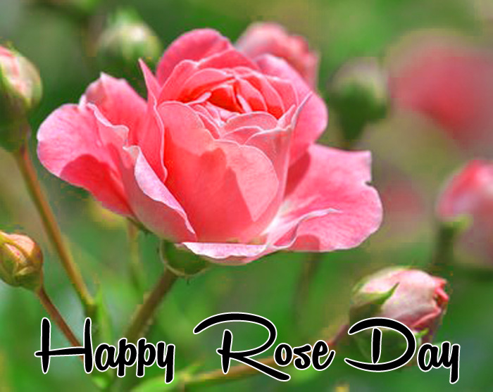best pink flower Happy Rose Day Gift pics hd