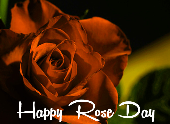 best red flower Happy Rose Day Gift hd