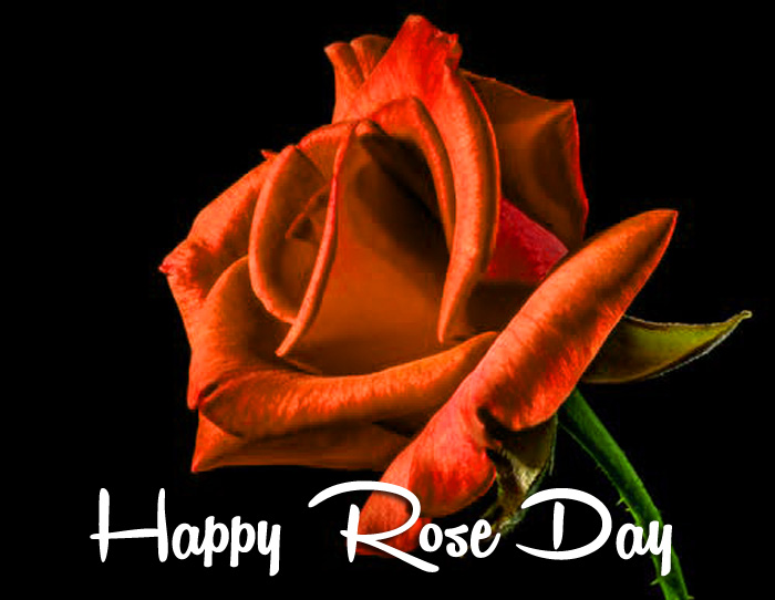 best red flower Happy Rose Day hd