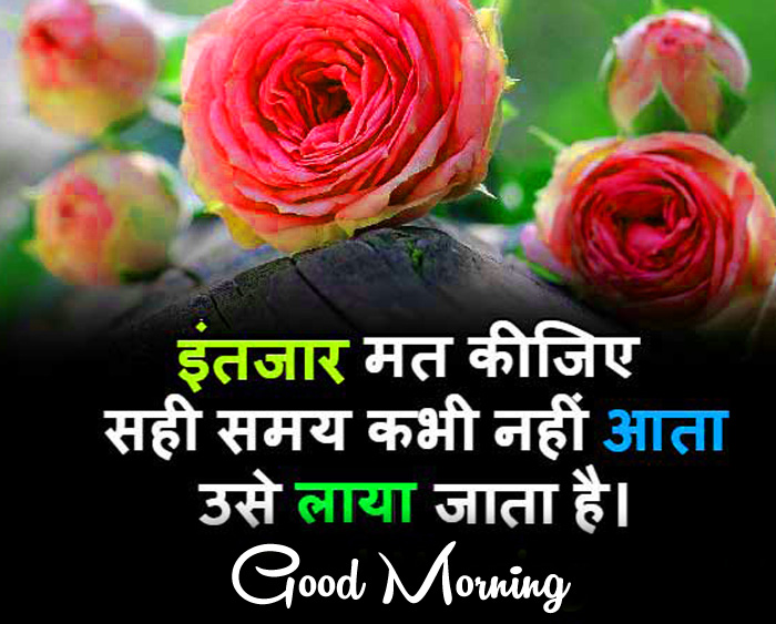 best red rose Good Morning in hindi hd