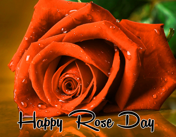 best sad flower Happy Rose Day hd