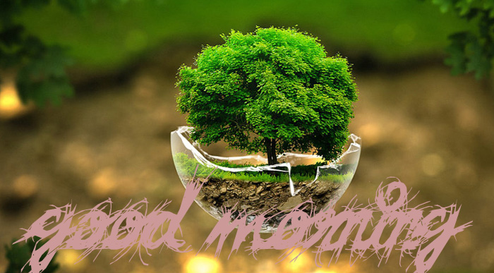 best tree and nature good morning image hd download
