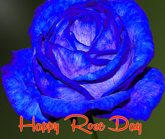 blue flower Happy Rose Day photo