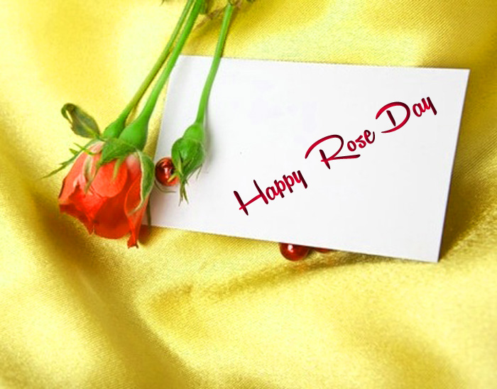 card flower Happy Rose Day hd