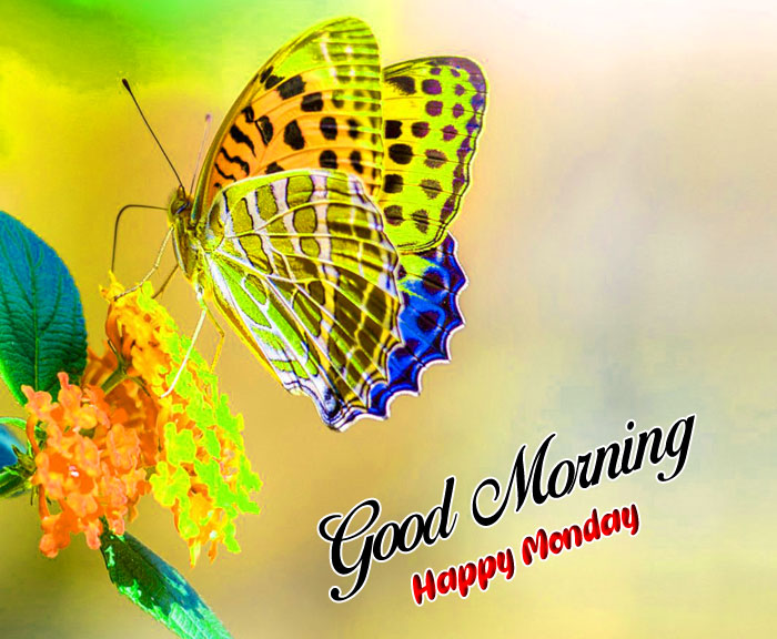 colorful butterfly Good Morning Happy Monday images hd