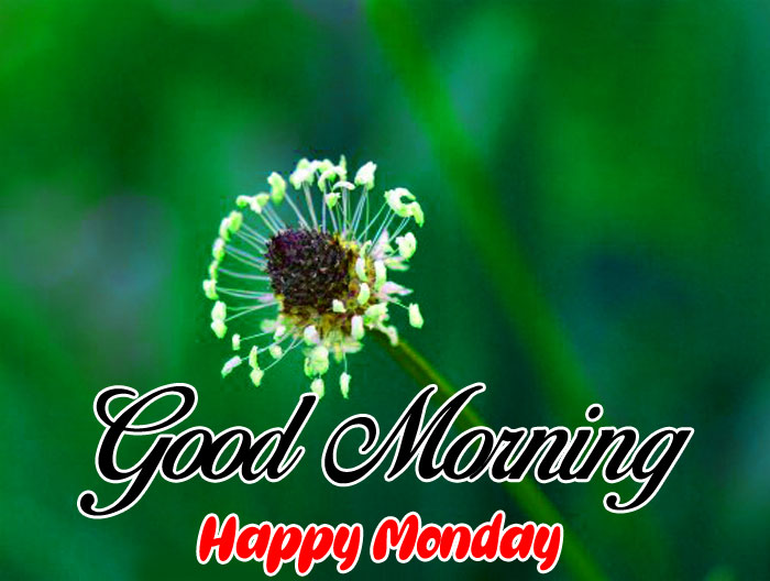 cute flower Good Morning Happy Monday images hd