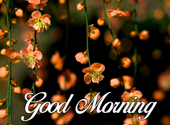 cute flower Good Morning images hd