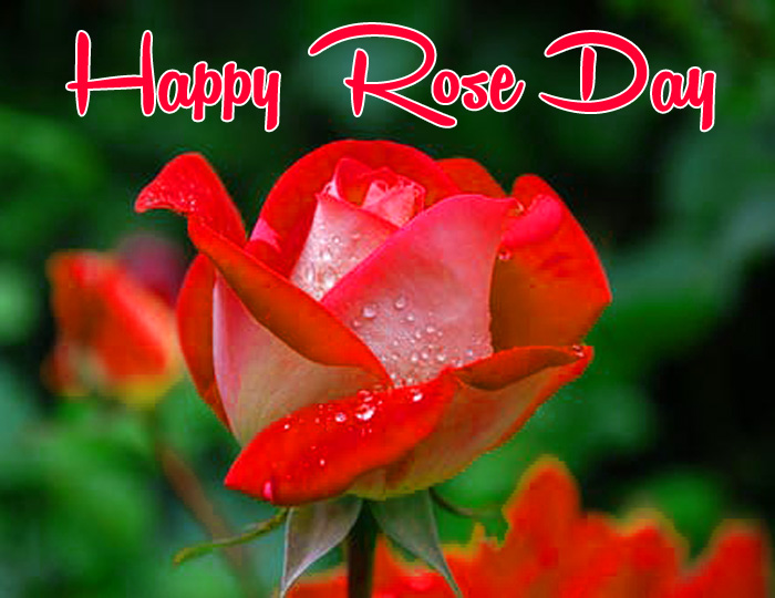 garden flower Happy Rose Day hd wallpaper