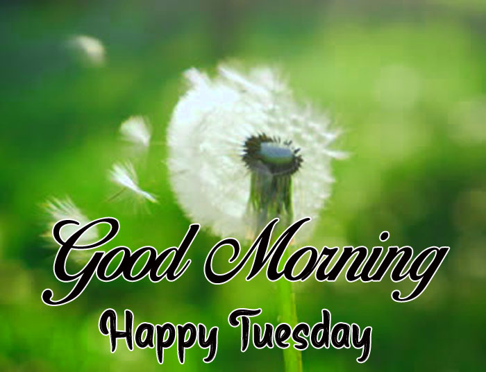 good morning happy tuesday flower images