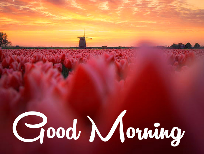 good morning natur images hd