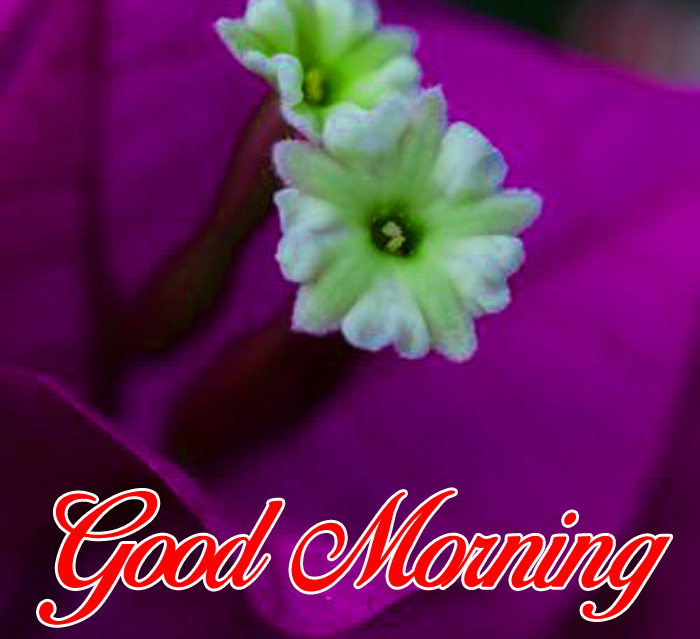 green flower Good Morning images hd