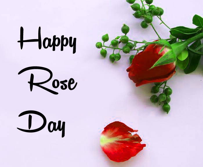 heart flower Happy Rose Day wallpaper