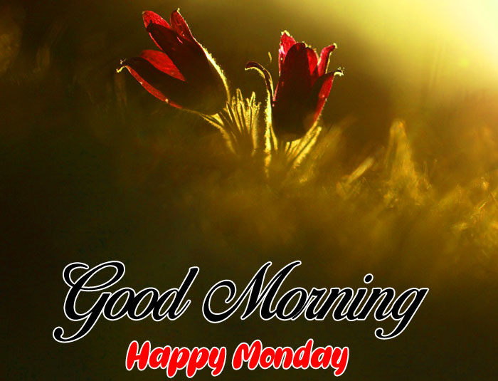 latest Good Morning Happy Monday flower images hd