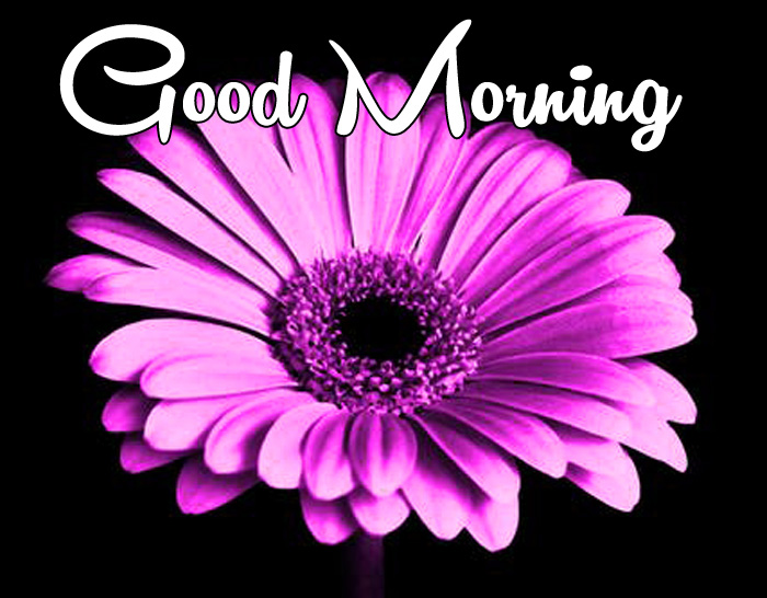 latest Good Morning images for whatsapp