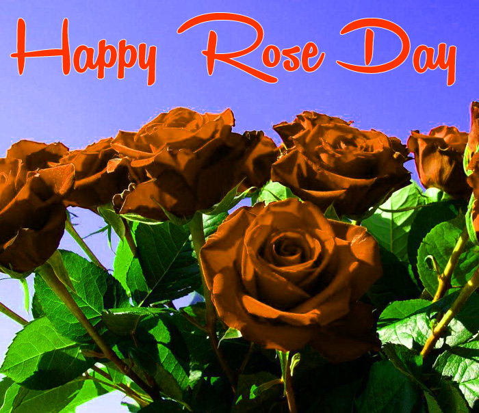 latest Happy Rose Day Gift flower images