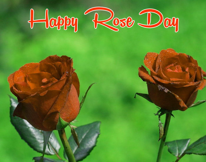 latest Happy Rose Day Gift two flower images hd