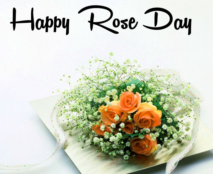 latest Happy Rose Day hd