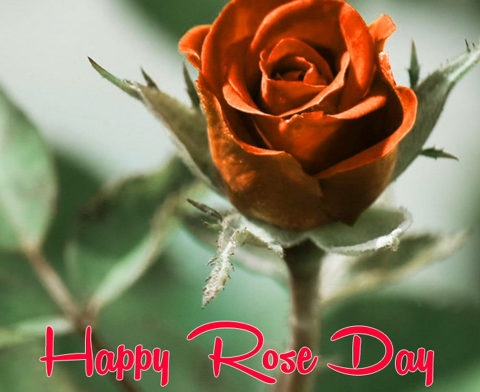 latest Happy Rose Day hd picture