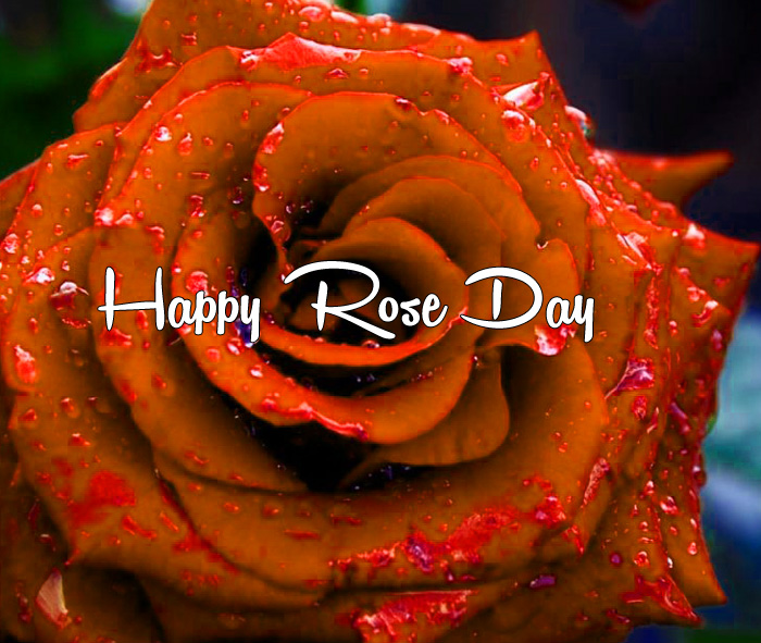 latest Happy Rose Day hd wallpaper