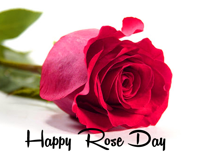 latest Happy Rose Day pink flower images